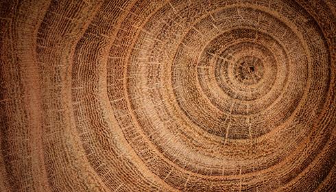 Baumrinde Nachhaltigkeitsbericht